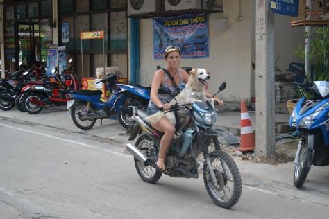 Koh Tao dogs