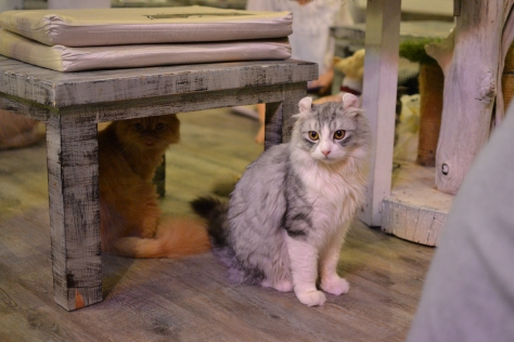 Caturday cat cafe Bangkok