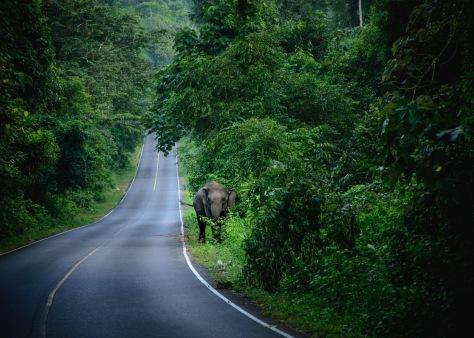 Khao Yai Thailand elephants