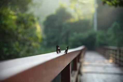 Khao Yai butterflies
